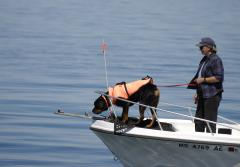 This dog is helping researchers at the New England Aquarium in Boston detect scat (or poop) from North Atlantic right whales.