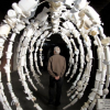 A whalebone rib cage replica made from empty white bottles.