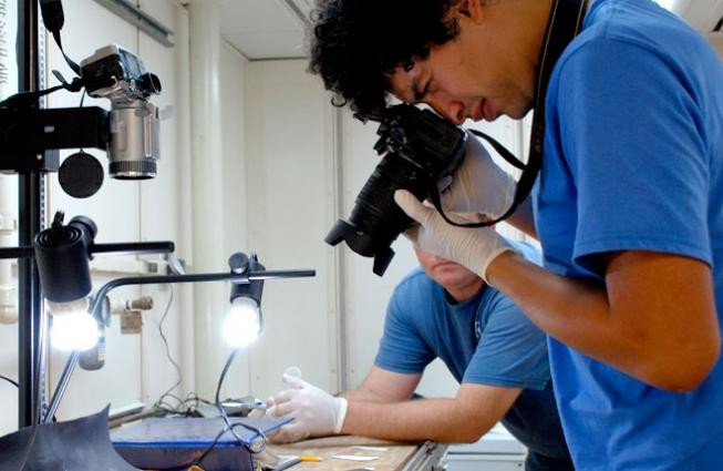After ocean scientists sort deep-sea coral samples into their different types, they measure and photograph the specimens.